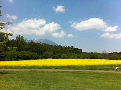 青空と緑に黄色!最高に気持ちよかったです!