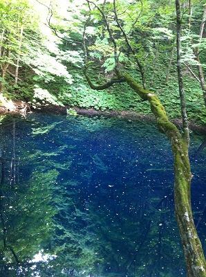 私の好きな場所。十二湖の青池