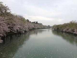 桜が見ごろでした♪