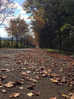 ネックレスロード(湯段温泉郷付近)のオオヤマザクラの紅葉