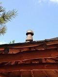 屋根の上に松茸のオブジェが…☆