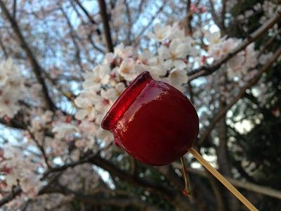 リンゴ飴と桜。