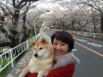 桜並木にて。ワンコロは私に抱っこされて迷惑そう?!苦笑