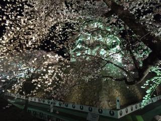 夜桜も最高です!静けさの中に華やかさがありました。
