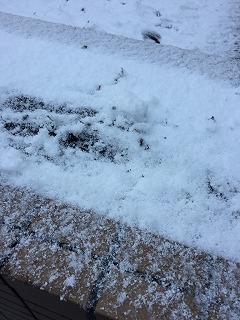 花壇につもる雪