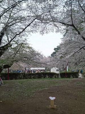弘前公園のハートの桜♪